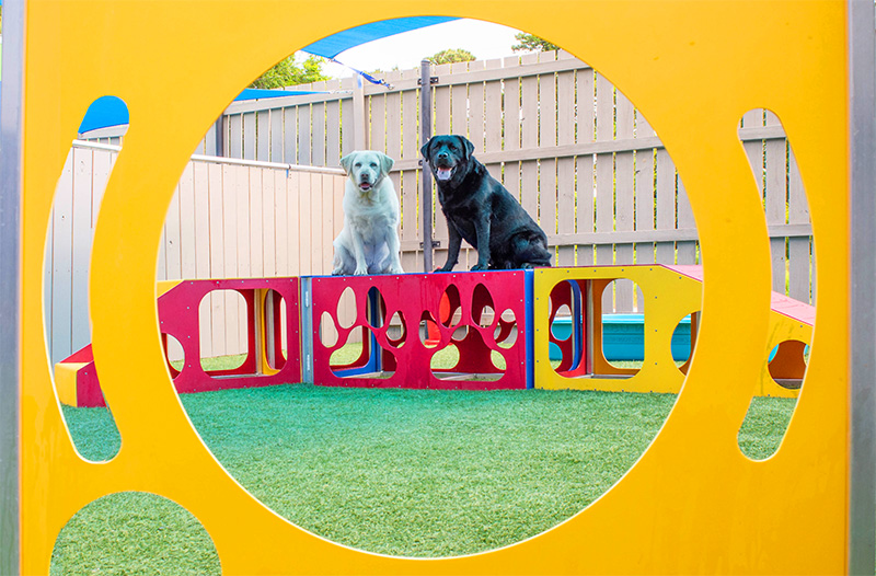 Check Out Our Play Structures   In The Dog House