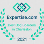 Best Dog Boarders in Charleston - 2021 In the Dog House